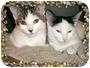 Adopt A Pet :: Emma & Esther - Oakville, ON