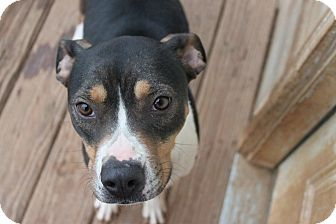 Hound (Unknown Type) Mix Dog for adption in Christiana, Tennessee - Oreo