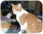 Adopt A Pet :: Baby - Catasauqua, PA