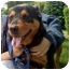 Photo 1 - Rottweiler Mix Dog for adoption in Pelham, New York - Jessie