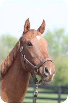 Thoroughbred Mix for Sale in Nicholasville, Kentucky - ME
