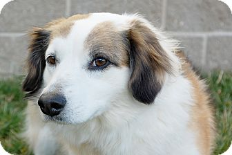 Border Collie Mix Dog for Sale in London, Kentucky - SuSu