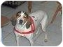 Adopt A Pet :: Dutches - Clayton, OH