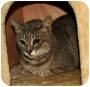 Adopt A Pet :: Isabel - Oxford, NY