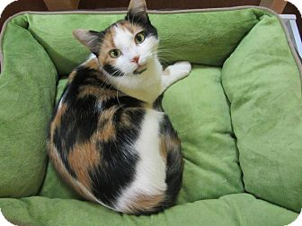 Calico Cat for Sale in Mobile, Alabama - Cassandra