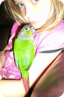 Conure for Sale in Tampa, Florida - Sprout