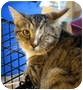 Adopt A Pet :: Mel - Pittsboro, NC