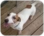 Adopt A Pet :: Max **ADOPTION PENDING** - Thomasville, NC