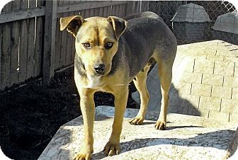 German Shepherd Dog Mix Dog for adption in Moulton, Alabama - Gretal