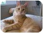 Adopt A Pet :: Elliot - Belleville, NJ