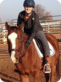 Thoroughbred/Quarterhorse Mix for adoption in Guthrie, Oklahoma - Felony