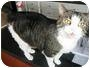 Adopt A Pet :: MISS KITTY KITTY - Jamestown, OH