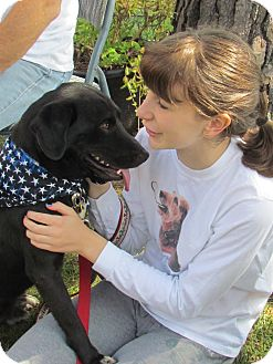 Labrador Retriever Dog for Sale in West Bridgewater, Massachusetts - Prince
