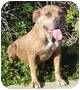 Adopt A Pet :: Rosie - Bellflower, CA