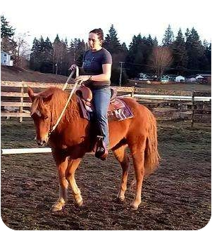 Quarterhorse Mix for Sale in Silverdale, Washington - FAVOR