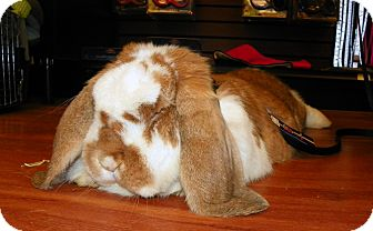 Lop, French for Sale in North Gower, Ontario - Winston