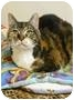 Adopt A Pet :: Pouncer - Lincoln, NE