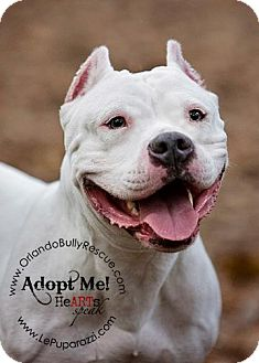 American Pit Bull Terrier Mix Dog for adption in Orlando, Florida - Sky