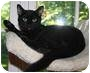 Adopt A Pet :: Blacky - Fairfield, CT
