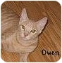 Adopt A Pet :: Owen - AUSTIN, TX