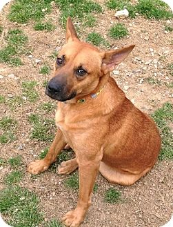 Terrier (Unknown Type, Medium)/Shepherd (Unknown Type) Mix Dog for adption in Marietta, Georgia - Coffee