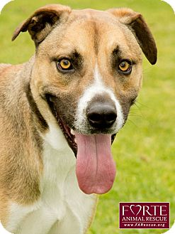 Australian Cattle Dog/Greyhound Mix Dog for adption in Marina del Rey, California - Cody