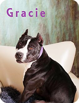 American Pit Bull Terrier Dog for adption in Prole, Iowa - Gracie