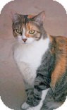 Calico Cat for adoption in Tempe, Arizona - Cali
