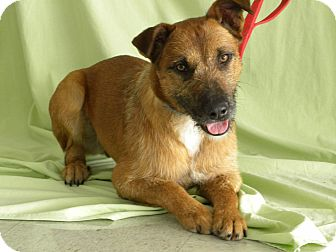 Shepherd (Unknown Type)/Terrier (Unknown Type, Medium) Mix Dog for adption in Princeton, Kentucky - Remus Lupin