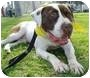 Adopt A Pet :: Zuka Girl - Bellflower, CA