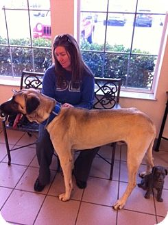 Anatolian Shepherd Mix Dog for adption in Little Rock, Arkansas - Marco