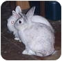 Adopt A Pet :: Bun & Bunny - Williston, FL