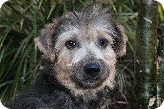 Terrier (Unknown Type, Medium)/Terrier (Unknown Type, Small) Mix Dog for Sale in North Palm Beach, Florida - Patty