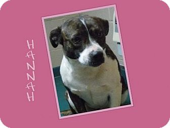 Terrier (Unknown Type, Medium)/Boxer Mix Dog for adption in Dallas, North Carolina - HANNAH