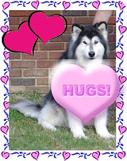 Alaskan Malamute Dog for adption in Creedmoor, North Carolina - Mattie