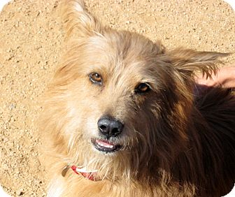 Terrier (Unknown Type, Medium) Mix Dog for adption in Scottsdale, Arizona - Iggy