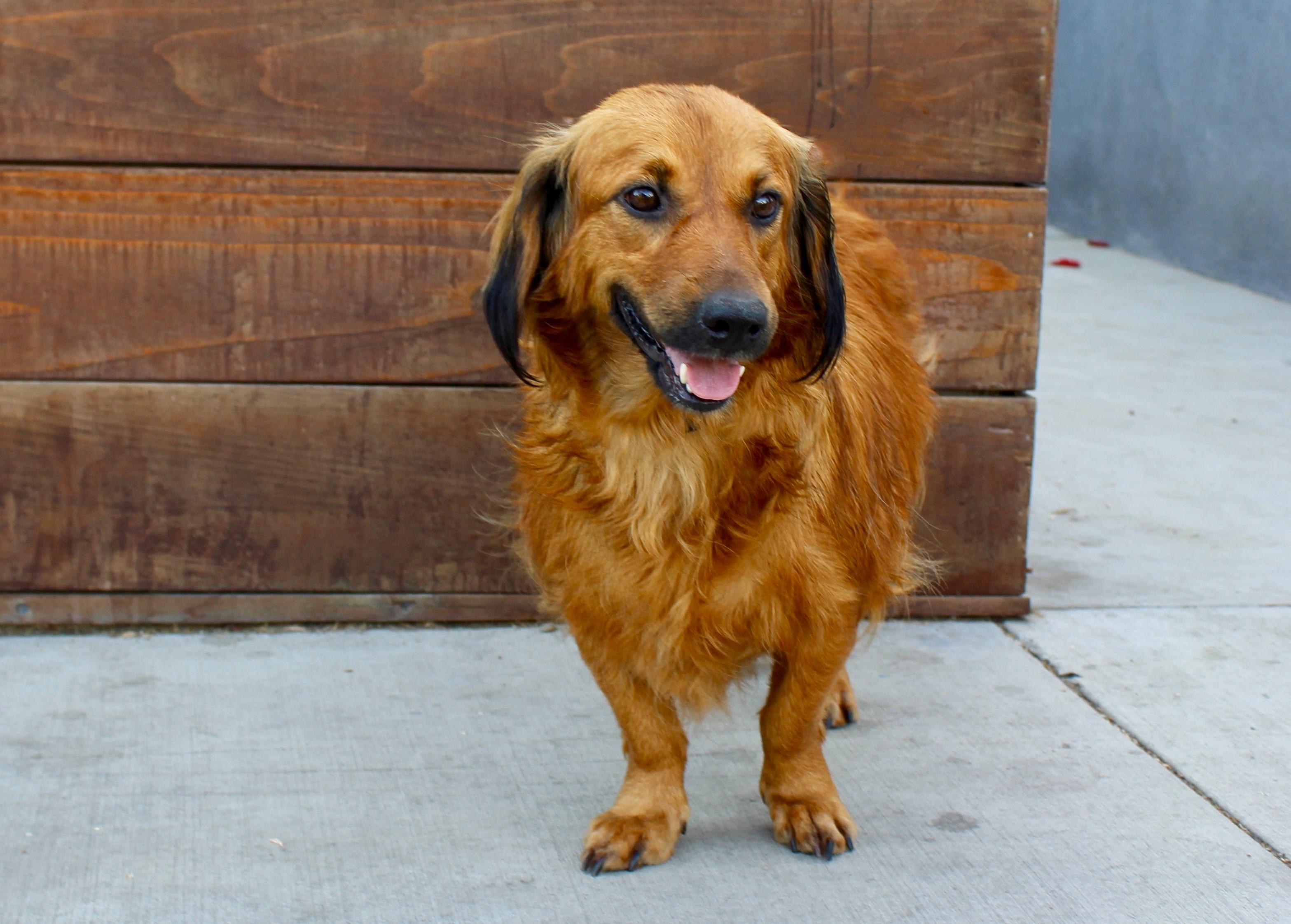 Adoption  Big Dogs Huge Paws Inc