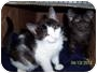 Adopt A Pet :: Lovely - Oceanside, NY