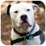 Photo 1 - American Bulldog/American Pit Bull Terrier Mix Dog for adoption in Fresno, California - Walter