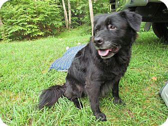 Labrador Retriever/Chow Chow Mix Dog for adption in Richmond, Virginia - Rivannah