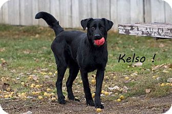 Labrador Retriever Mix Dog for Sale in Hamilton, Montana - Kelso