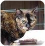 Adopt A Pet :: Thelma - Culver City, CA