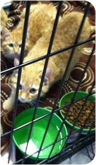 Domestic Shorthair Cat for Sale in Mobile, Alabama - Tweety