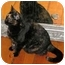 Photo 3 - Domestic Shorthair Cat for adoption in Toronto, Ontario - Mama Mia
