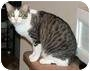 Adopt A Pet :: Antoinette - Tucson, AZ