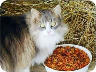 Domestic Mediumhair Cat for adoption in blairsville, Georgia - Barn Cats-Male/Fem