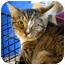 Photo 1 - Domestic Mediumhair Cat for adoption in Pittsboro, North Carolina - Mel