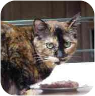 Domestic Shorthair Cat for adoption in Culver City, California - Thelma