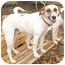 Photo 1 - Foxhound/Pointer Mix Dog for adoption in Richmond, Virginia - Sweet Pea*Foster me