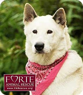 Husky/Kishu Mix Dog for adption in Marina del Rey, California - Cheyenne